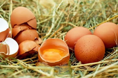 food, nature, nest, egg, breakfast, eggshell