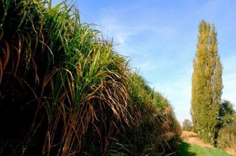 nature, tree, plant, field, landscape, sky, grass