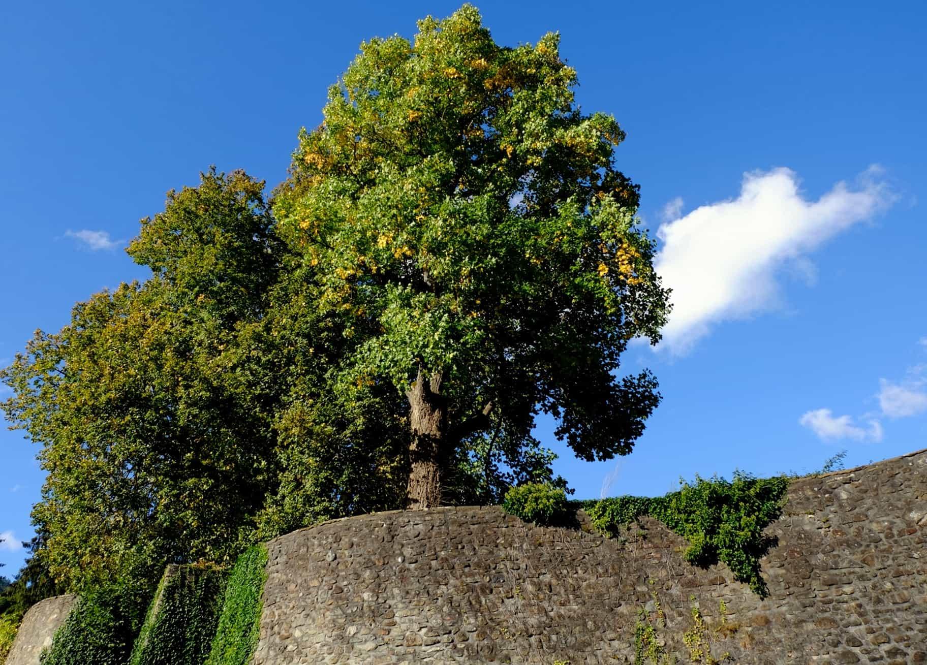 Image Libre Nature Arbre Ciel Plante Paysage Ext Rieur