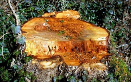 natura, legno, all'aperto, muschio, foresta, natura, foglia