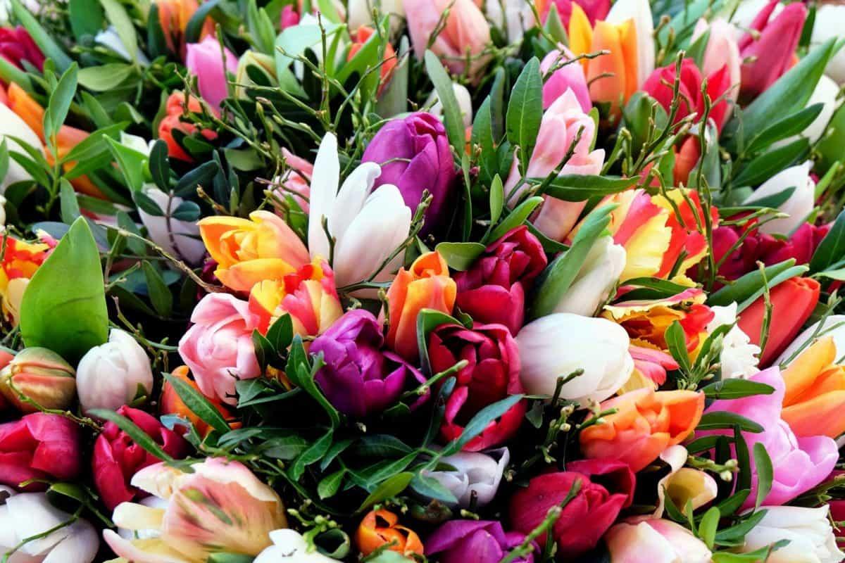 jardín, flora, tulipán, naturaleza, flor, hoja, colorida, arreglo