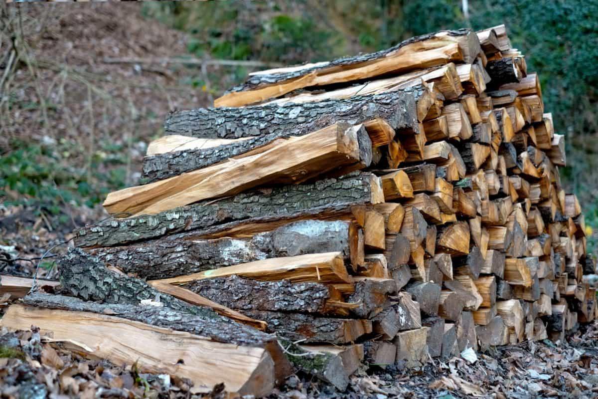 kostenlose bild baum natur wald brennholz holz natur. Black Bedroom Furniture Sets. Home Design Ideas