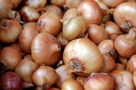 garlic, onion, nutrition, food, vegetable, root