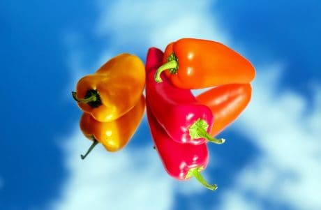 nature, pepper, vegetable, food, vitamin, blue sky, reflection