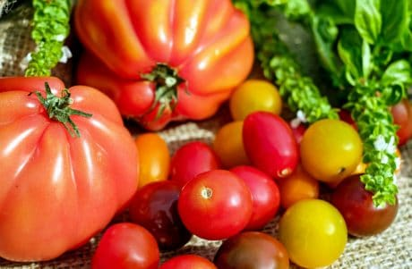 red, colorful, nutrition, vegetable, food, tomato, vitamin