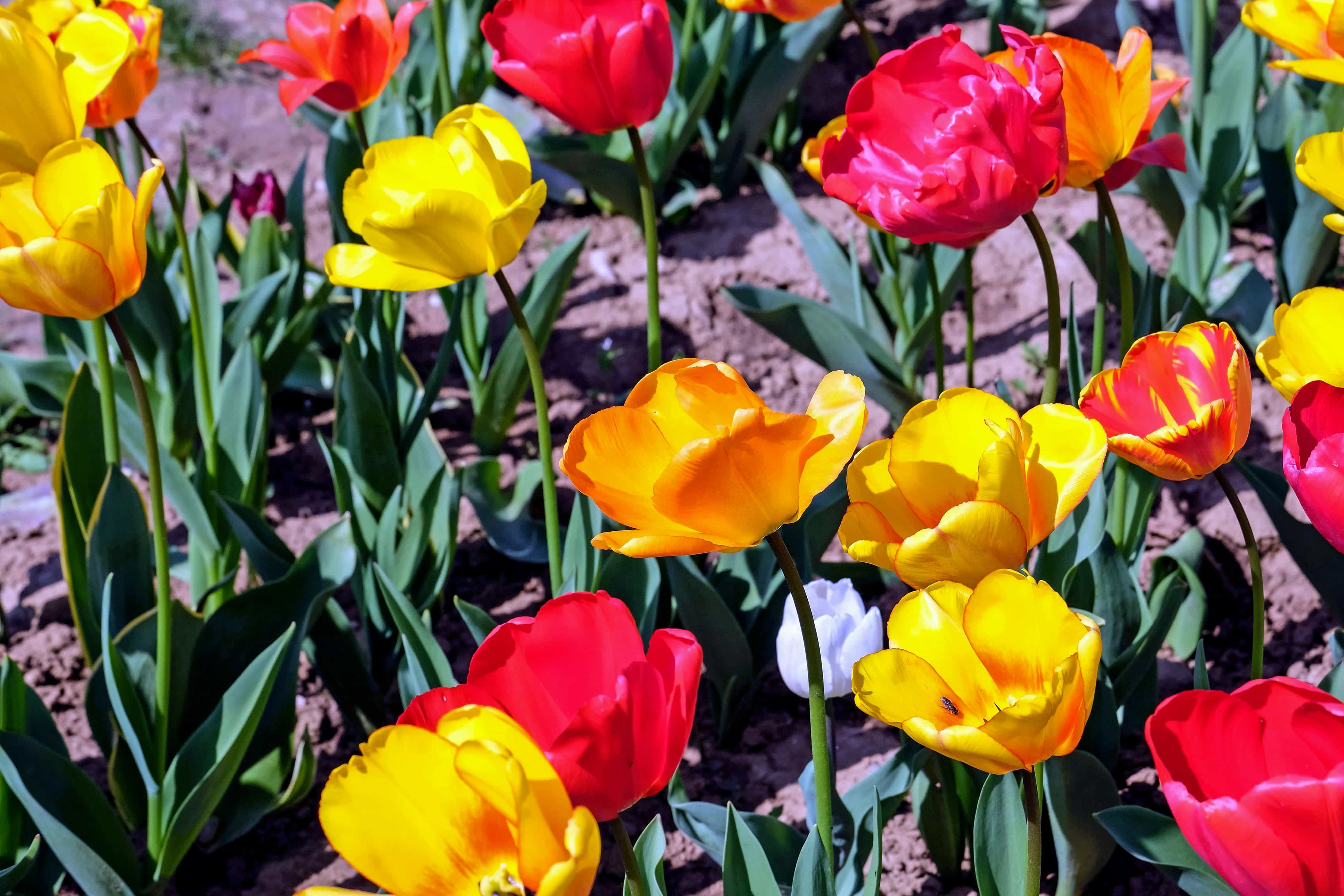 Imagine Gratuită Flori Frunze Vara Colorate Petale