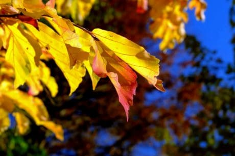 nature, tree, flora, leaf, autumn, leaves, forest, foliage