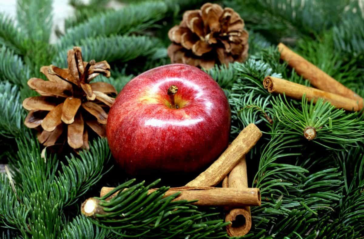 pine, winter, still life, apple, fruit, vitamin, cinnamon