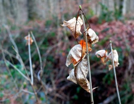 Flora, autunno, giardino, legno, erba, foglia, natura, albero