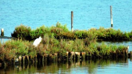 vatten, hägrar, bird, djur, natur, träd, sjön, landskap, shore