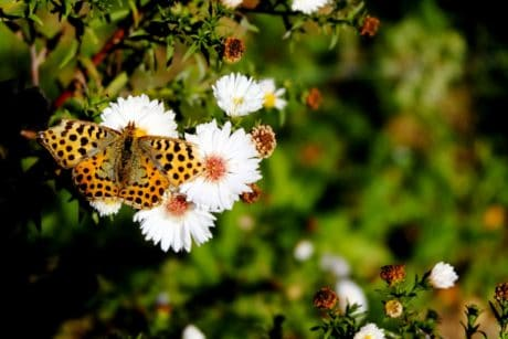 butterfly, insect, flora, summer, flower, nature, garden, plant