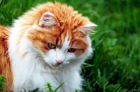자연, 잔디, 귀여운, 동물, 고양이, 고양이, 영, 고양이, 애완 동물
