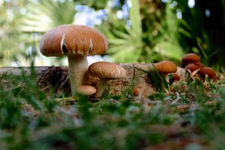 nature, mushroom, vegetable, grass, fungus, flora