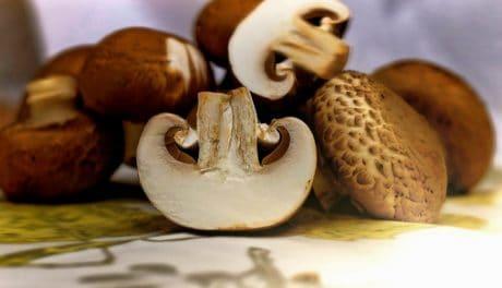 funghi, organismo, piante, cibo