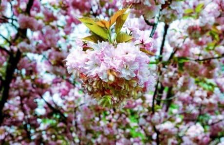 branch, nature, petal, flower, flora, tree, garden