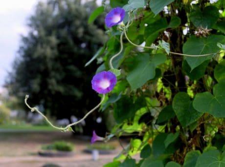 keř, příroda, list, léto, flora, zahrada, květina, rostlina, bylina