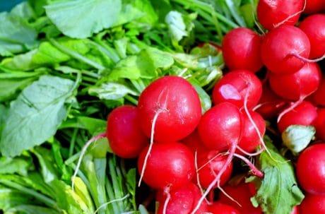 hoja de rábano, comida, rojo, vegetales, jardín, naturaleza, hierba