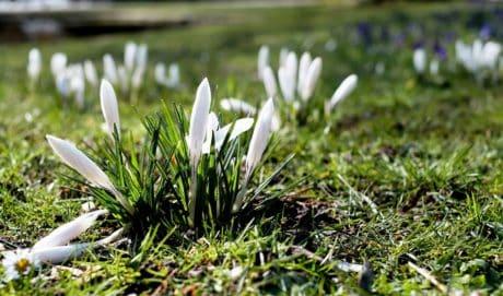 flower, ground, flora, nature, summer, grass, plant, herb