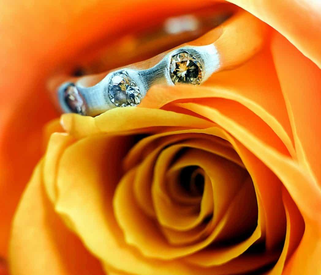 fleur, bijoux, macro, pétale, rose, plante, art, décoration