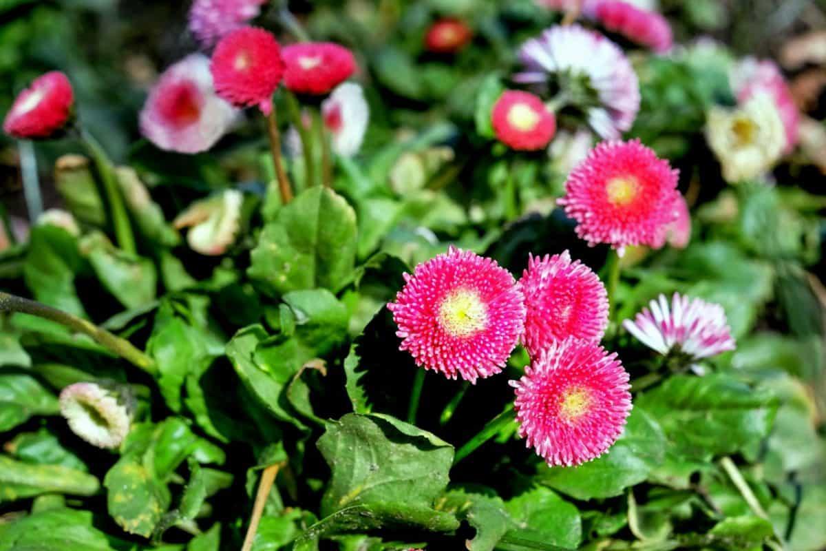 summer, garden, flora, petal, nature, daylight, wildflower, leaf, plant