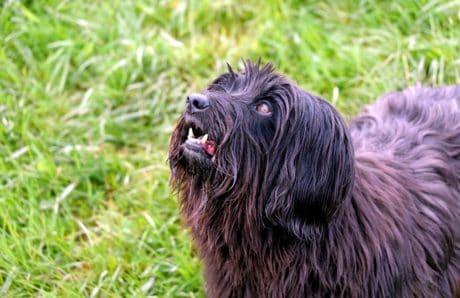 piel, animal, perro, mascota, canino, Zoología, hierba, al aire libre, campo