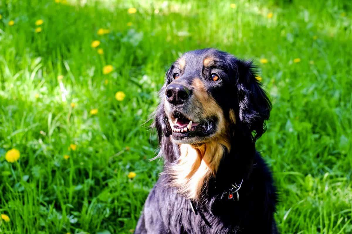 cute, grass, outdoor, daylight, field, dog, pet, canine, puppy, outdoor