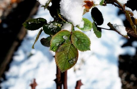shrub, leaf, cold, winter, cold, nature, ice, water