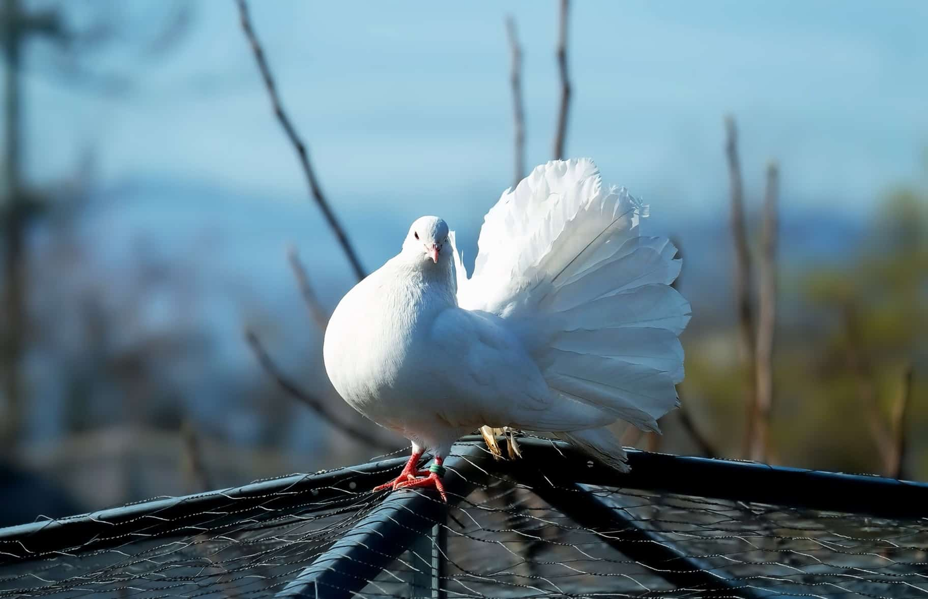 Открытки месяцами, красивая открытка голубей