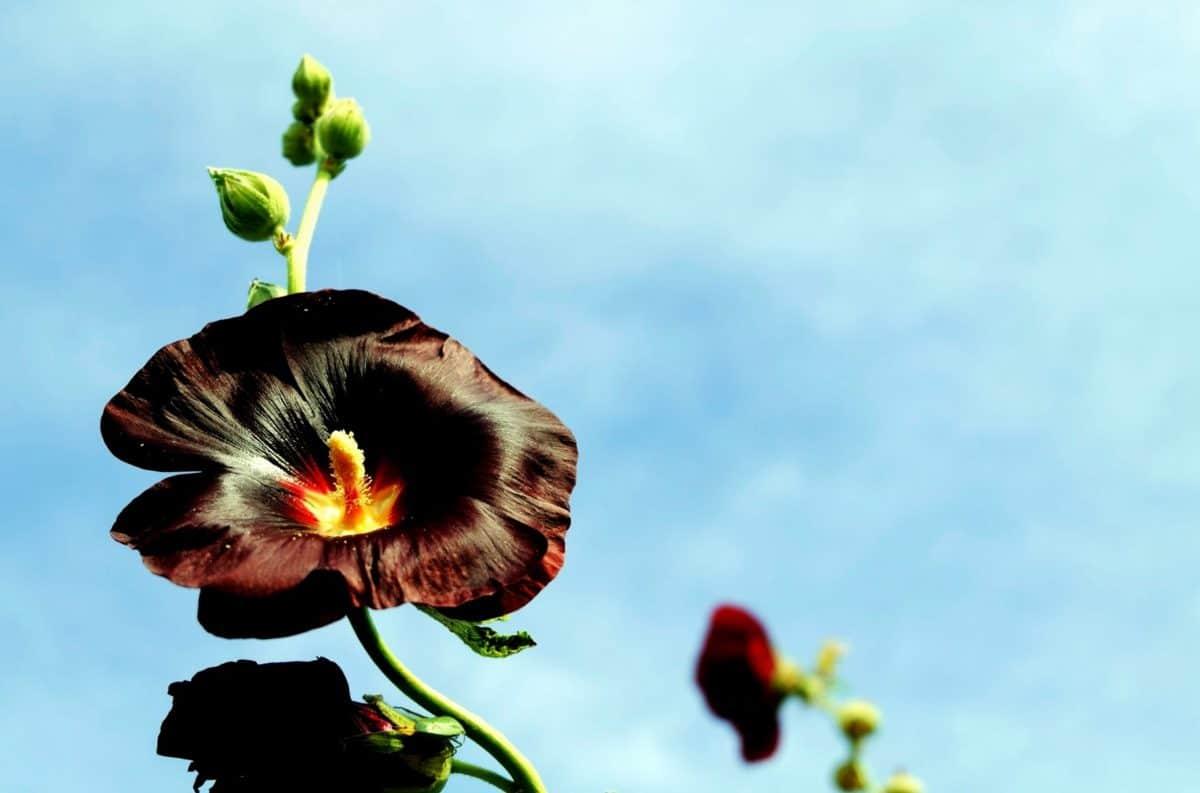 cvijet, list, prirodi, ljeto, flore, biljka, blu nebo