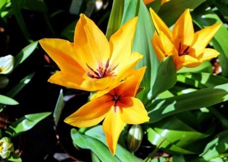 цвете, флора, Градина, листа, лято, природа, растения