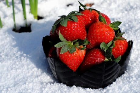 snow, food, winter, fruit, strawberry, sweet, dessert