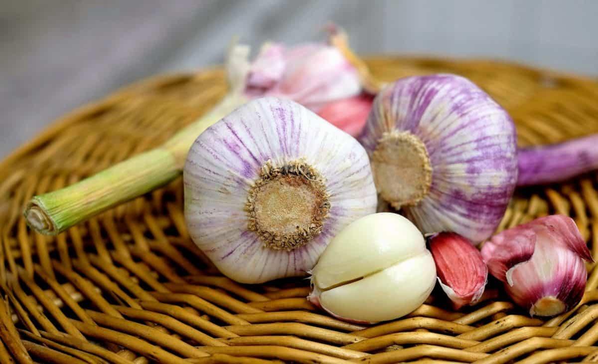 vegetal, flora, cesta, comida, ajo, tallo, cesta de mimbre