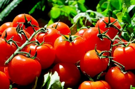vegetable, food, tomato, nutrition, delicious, organic