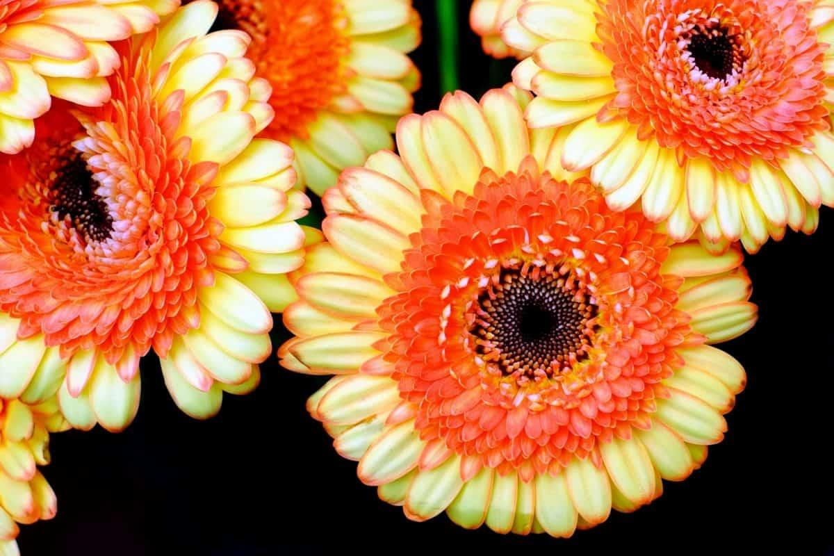 自然, 植物, 花, 草本