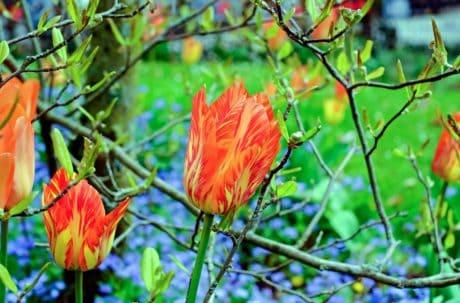 Blume, Natur, Flora, Blatt, Sommer, Baum, Pflanze, Garten