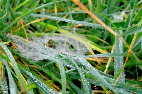 grass, dew, moisture, nature, herb, leaf, garden, plant