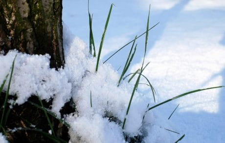 nature, snow, tree, winter, grass, ice, cold