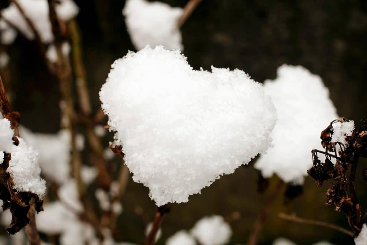sneeuw, sneeuwvlok, horen, winter, koud, decoratie, hart, natuur