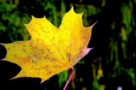 flora, nature, leaf, plant, tree, autumn, yellow