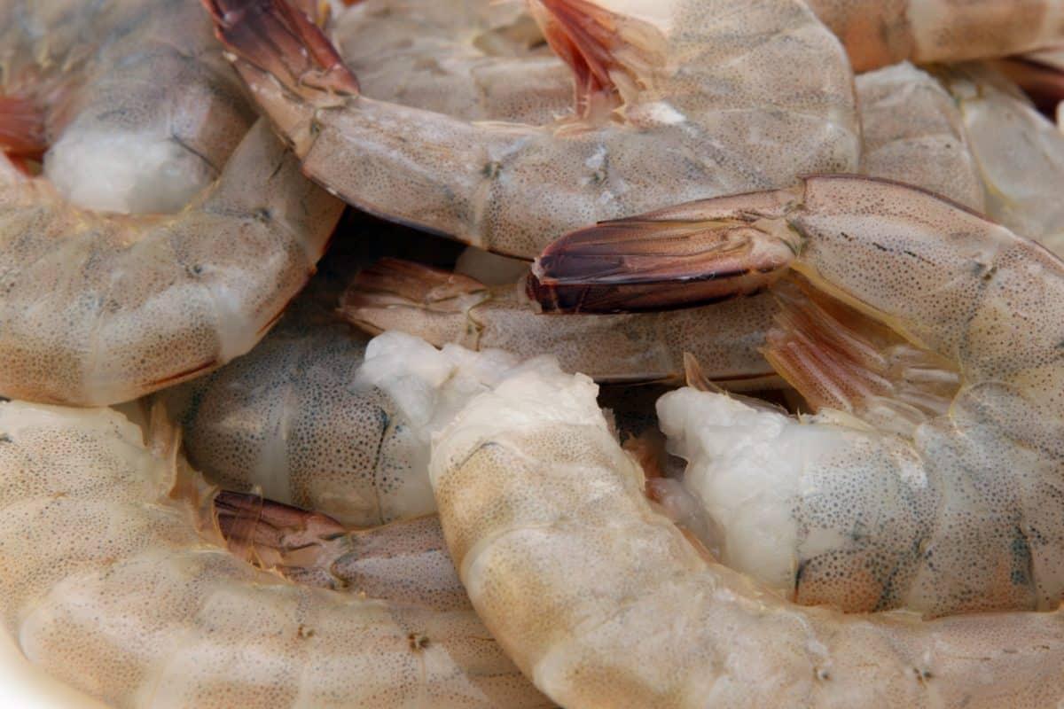 Image libre nourriture poissons d licieux alimentation for Nourriture a poisson