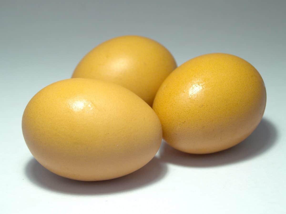 potraviny, organické, skořápka vejce,