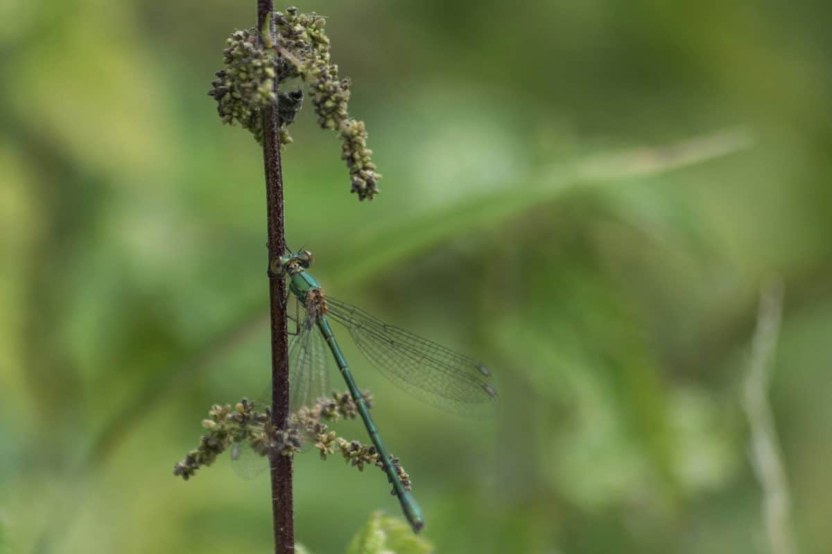 leaf, nature, grass, dragonfly, insect, arthropod, invertebrate