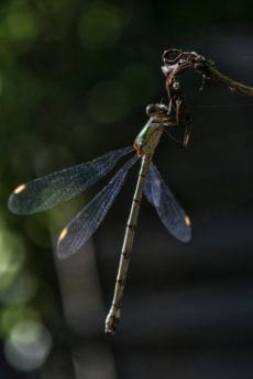 wildlife, nature, insect, dragonfly, invertebrate, arthropod