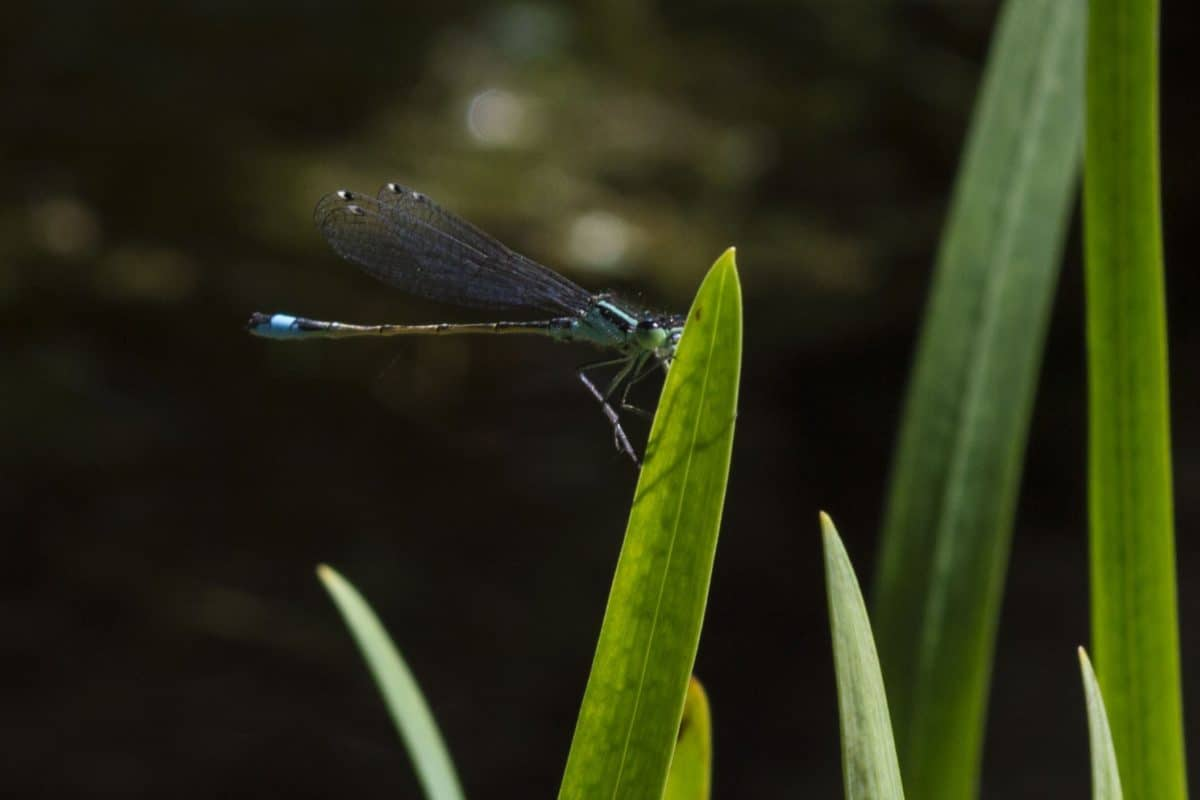 wildlife, dragonfly, leaf, nature, insect, arthropod, invertebrate