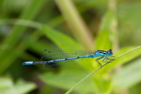 macro, green leaf, nature, insect, dragonfly, arthropod, invertebrate