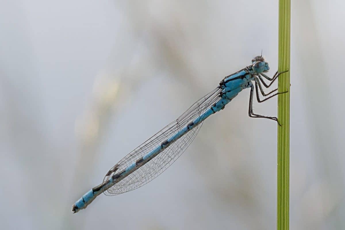 insect, invertebrate, macro, detail, wing, dragonfly, arthropod, animal