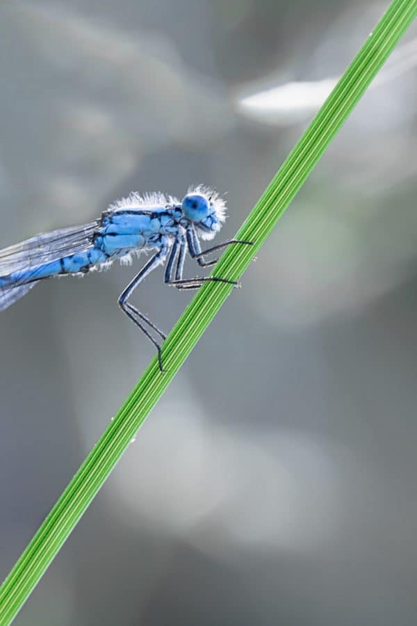 dragonfly, nature, wildlife, insect, arthropod, invertebrate