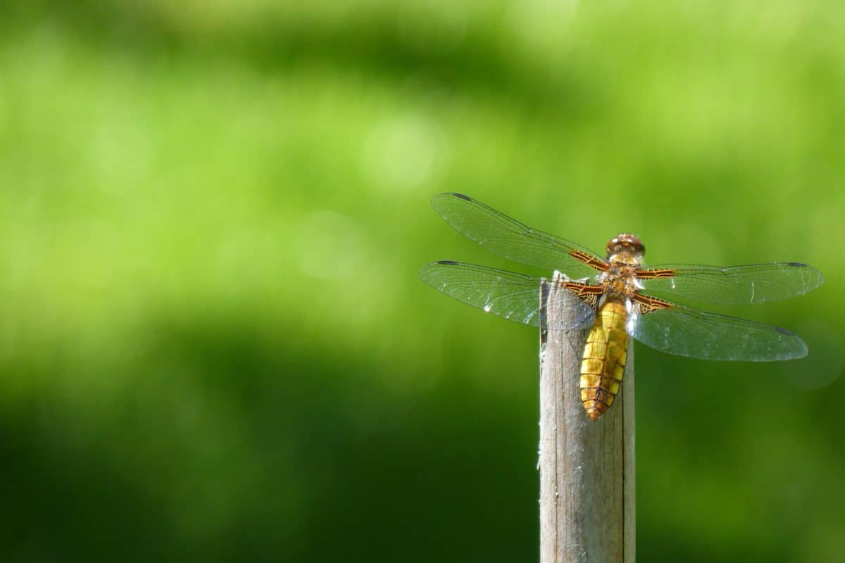 nature, insect, leaf, dragonfly, arthropod, invertebrate