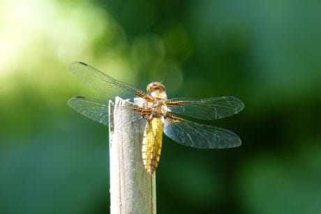 wildlife, nature, insect, dragonfly, arthropod, invertebrate