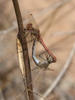 animal, macro, insect, invertebrate, dragonfly, nature, wildlife